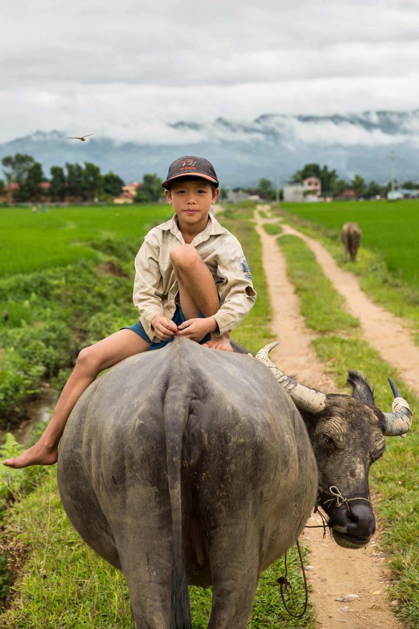 Travel Portrait of A young boy rides a water buffalo for UNICEF Vietnam | Hanoi Photographer