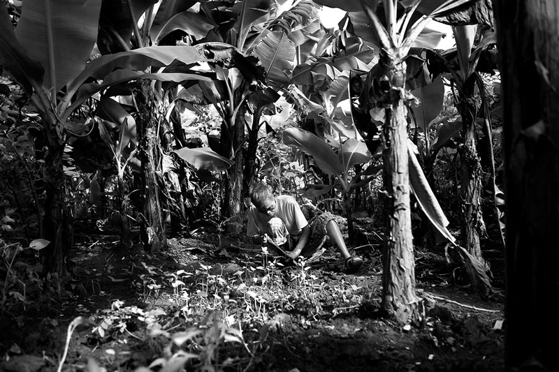 Phu tends to his garden surrounded by banana trees. Phu, at the age of 18, lost one leg from the knee down and the majority of his fingers to leprosy. He is now 83 years old and has been living at Van Mon since he was 16. The Van Mon village can only afford to give it's residents 400 gr of rice a day and 100gr of meat a month. Phu and the other residents must have a garden to supplement their diet as they have no money to buy food.